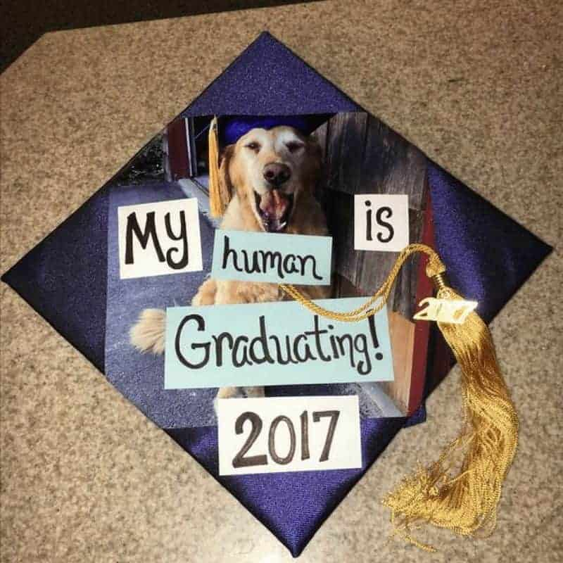 ideas for graduation caps - dog
