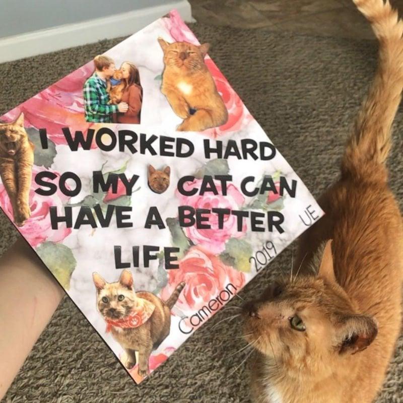 grad caps funny - better life cat