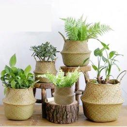 houseplants in wicker baskets