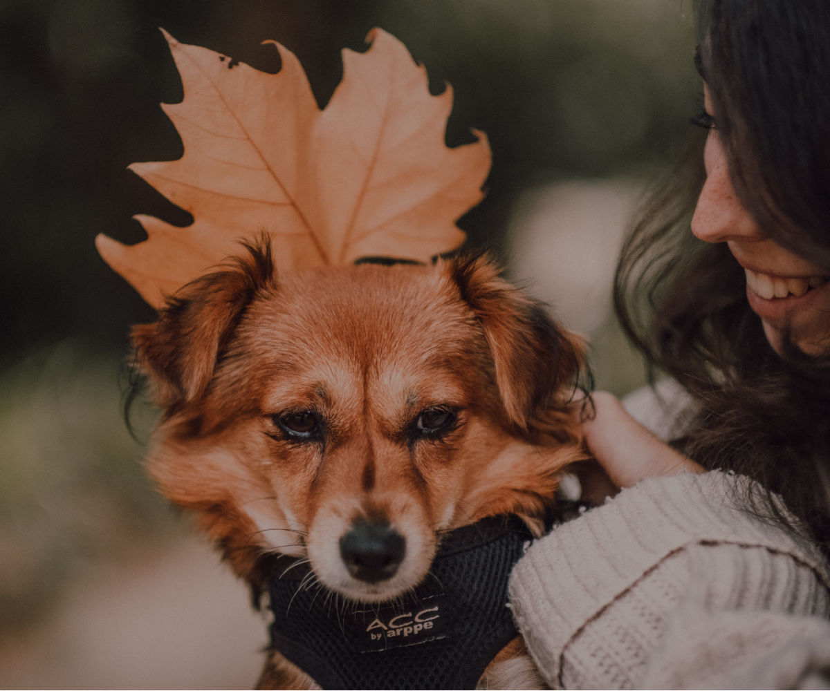 cute dog posing with a November fall leaf as big as his head while girl smiles holding dog