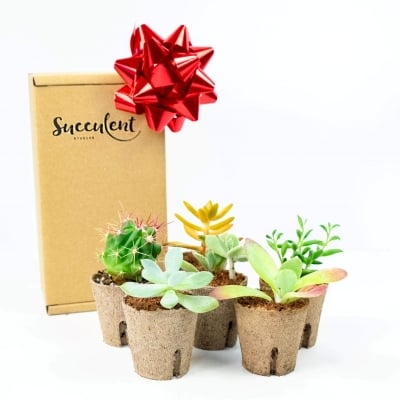 best gift idea for college girls, a succulent subscription box