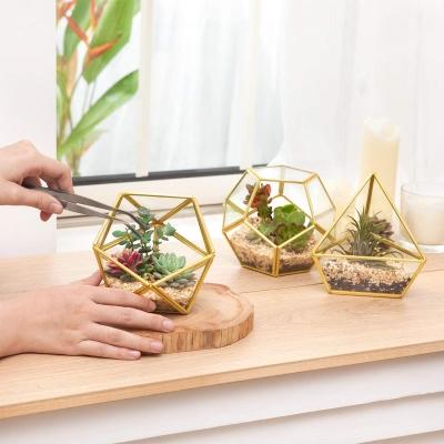 Mini Glass Geometric Terrarium Container for succulent plants Set of 3