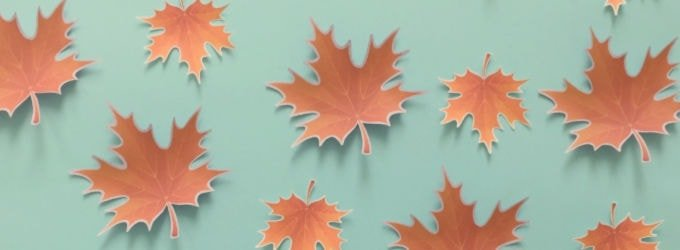 paper maple leafs on blue green background