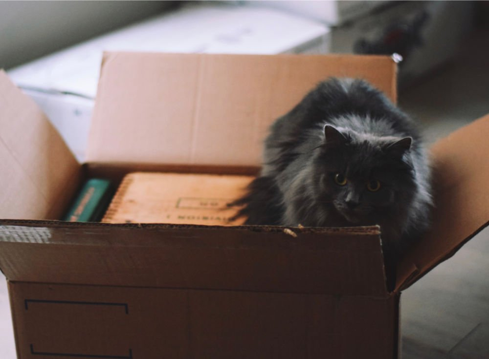 cute black cat sitting inside of a college care package