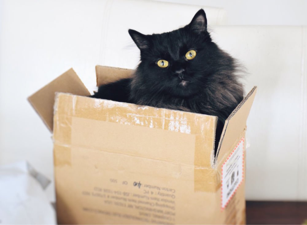 fluffy black cat sitting inside of a package