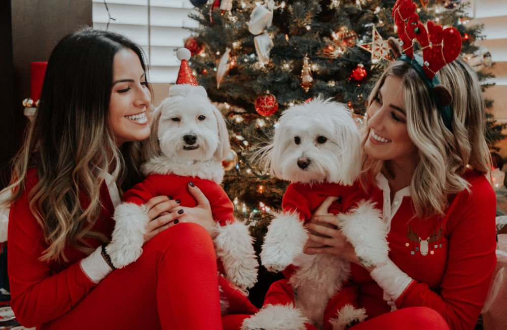 women best friends smiling at each other dressed in red PJs holding white dogs in Christmas sweaters
