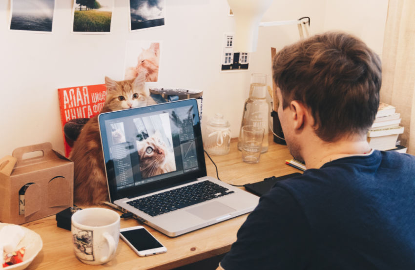 college student using laptop while cat is right behind it making a silly face